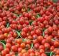 Benson Idahosa University Offsets Tomato Shortage With Harvest Of 800,000 Tons