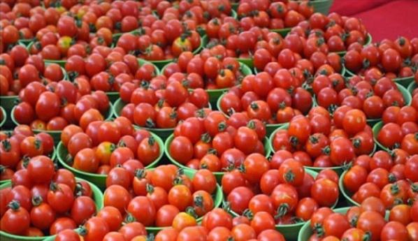 Benson Idahosa University offsets Tomato shortage