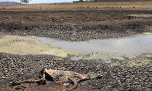 Bible News: Carcasses In The Wilderness