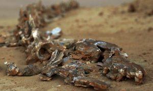 Whale Fossils In Egypt Desert Prove Noah's Flood?