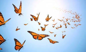 Bible News: From One Butterfly To Another, Would You Like To Fly?